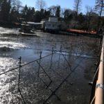 井の頭公園の水が・・・・