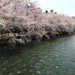 青森旅行記〜前編〜弘前公園の桜がレベル違いすぎて泣ける